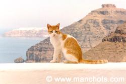 Chat, Oia - île Santorin (Grèce)